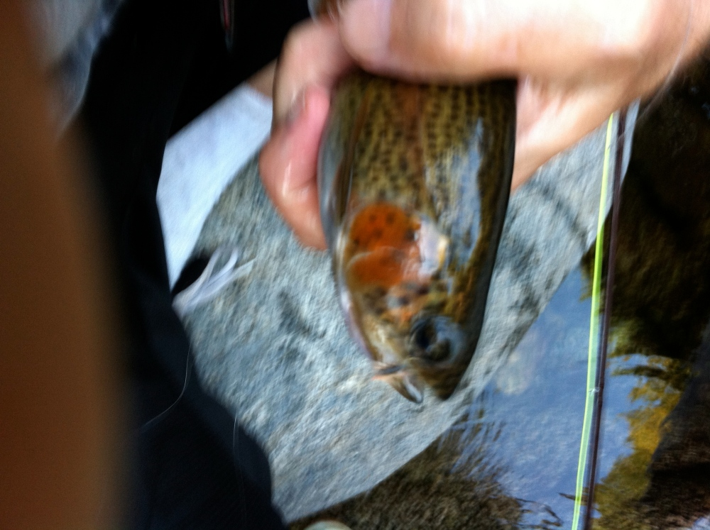 Fly fishing for the first time in the San Gabriel Mountains (3/3)