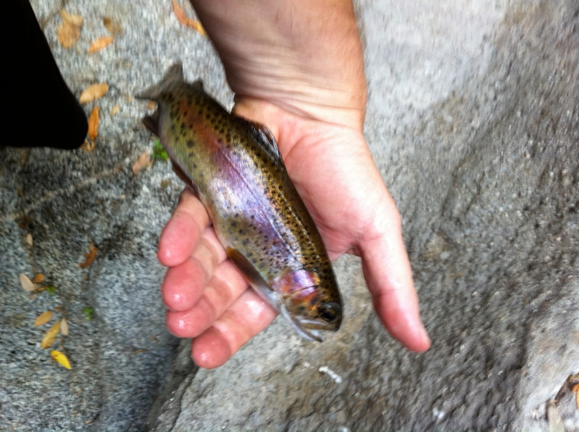 Beautiful color on this trout, which was released, unharmed, back to the water. (Jim Burns)