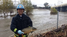 Howard Wong saved this and three other carp from a sidewalk demise during our recent storms. (LAStormwater)
