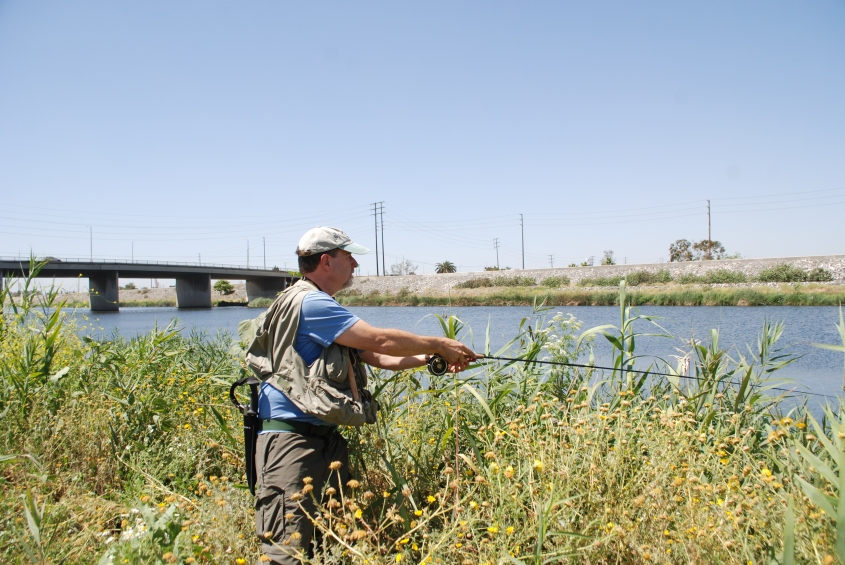WILDFLOWERS: Become a citizen scientist and help FoLAR document what's in the Los Angeles River. (William Preston Bowling)