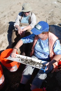 BIOLOGISTS Sabrina Drill (left) and Rosi Dagit inspect part of the tilapia haul. (William Preston Bowling)