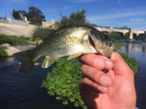 BLUE SKIES and bass are a perfect combo (Nick Blixt)