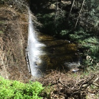 Water's flowing, but trout are scarce at Chantry Flat