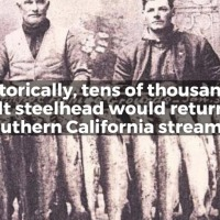 CalTrout begins campaign to save Southern Steelhead from extinction